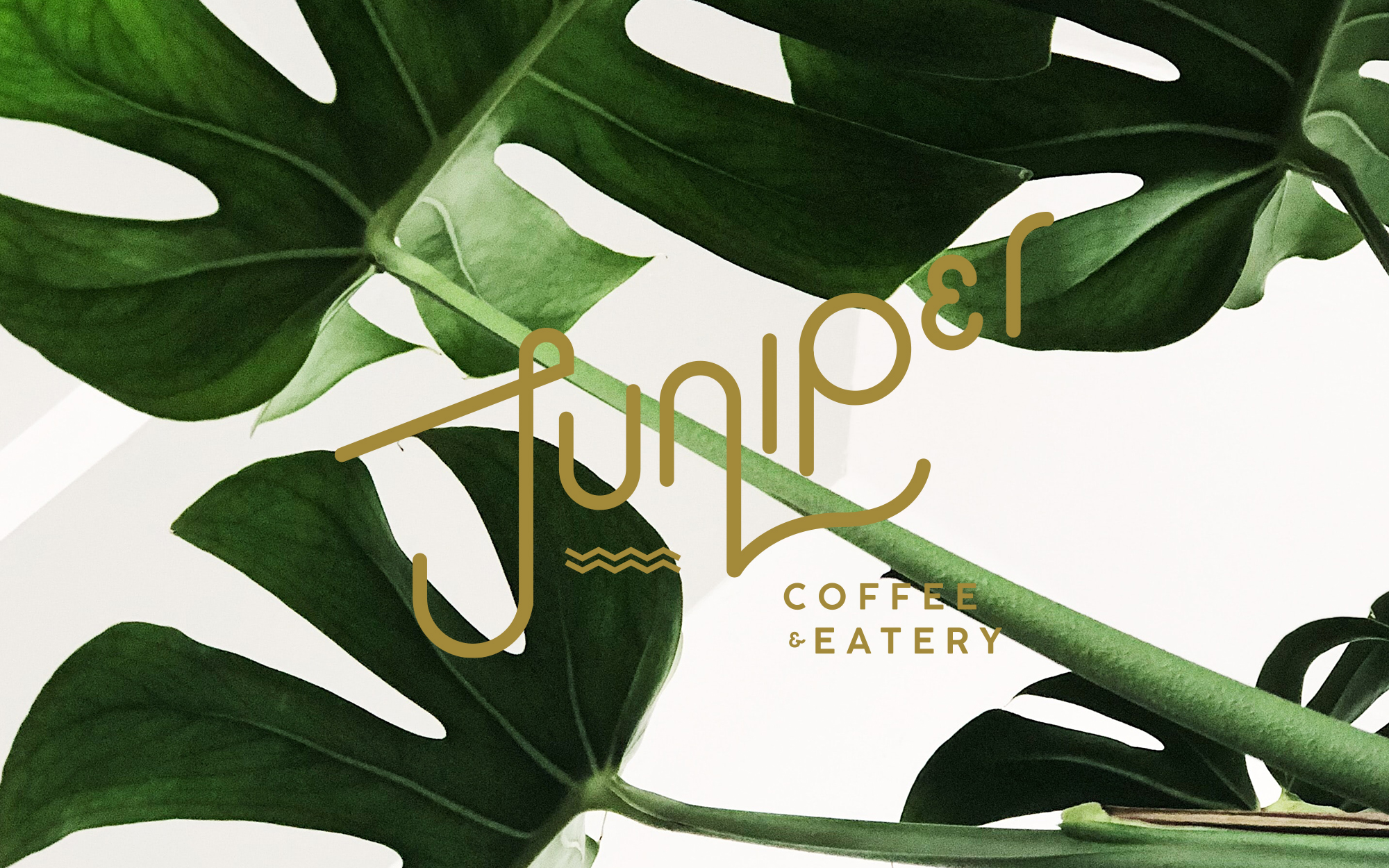 JuniperCoffee_2020_03